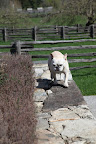 Lazy, arrogant animals!  They won't have a nice stone wall to perch on if they don't pitch in on the minor details of maintenance!
