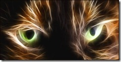 Close up of the eyes of a tortie or brindle cat