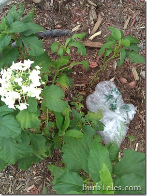 Protect plants when spraying tough weeds