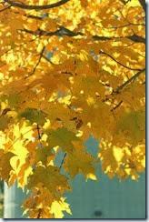 2014-10-26 Oct 26 067