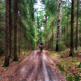 by Bente Agerup - Landscapes Forests ( forests, horses, riding, trees, roads )