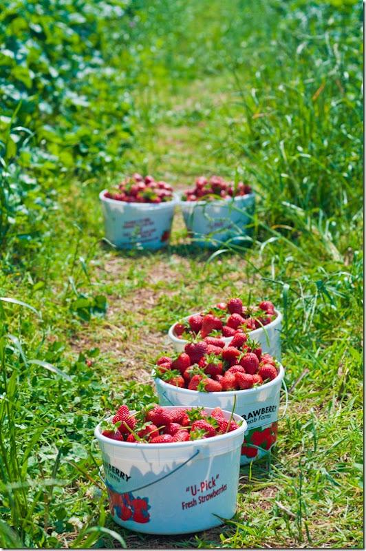 Strawberry sorbet-0834