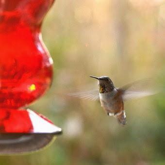 HummingbirdCamera