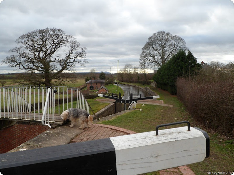 SAM_0013 Frankton Locks