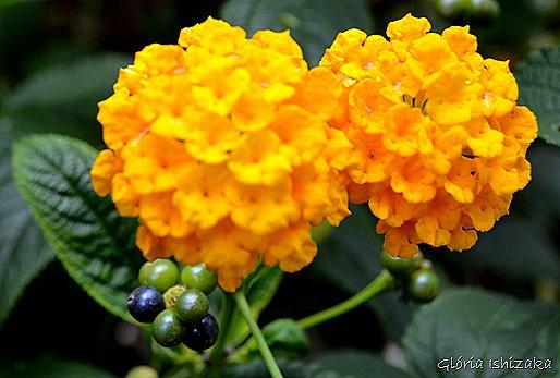 Glória Ishizaka - Flor amarela 28
