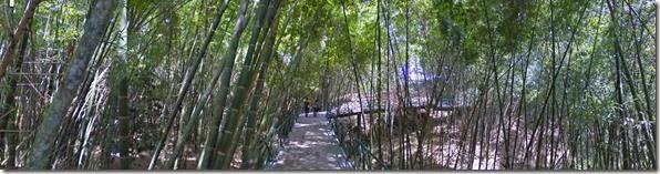 Bosque de Guadua Parque del Café