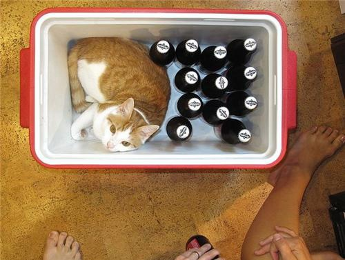 Can-cat-drink-alcohol-15