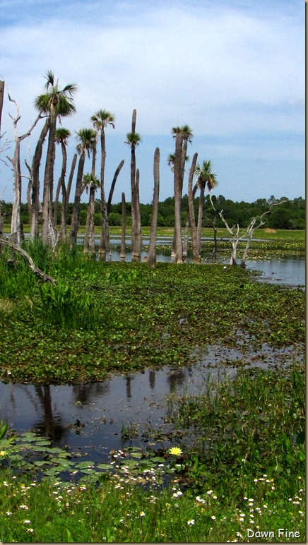 OrlandoWetlands_128