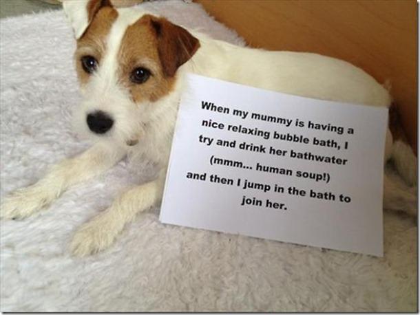 dog-shaming-bad-12