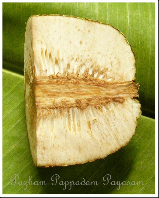 Kadachakka/Breadfruit