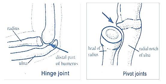 hinge-joint-pivot