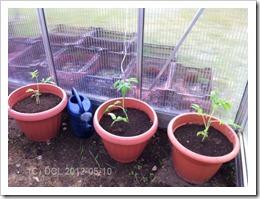 tomaterikrukor