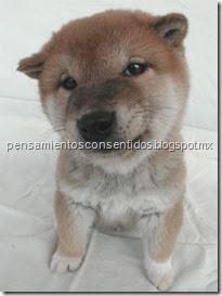 1220466385_puppies-94