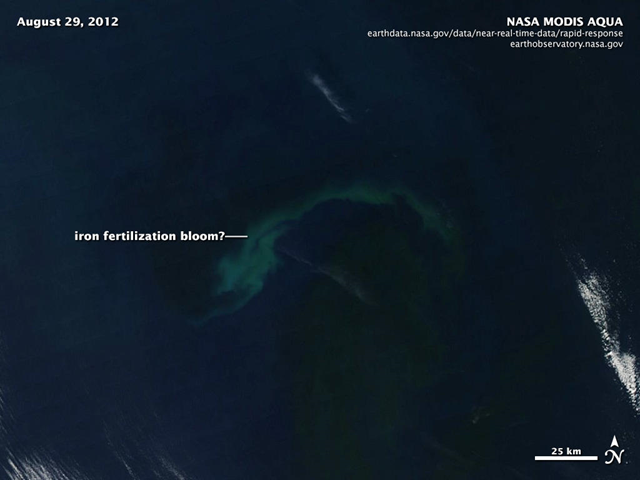 Satellite view of possible phytoplankton bloom caused by Russ George's rogue iron fertilization experiment, 29 August 2012. NASA / MODIS / AQUA