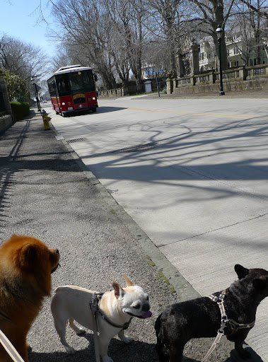 Girls, here comes the Newport Trolley!  Let's hop on and do some more sightseeing!