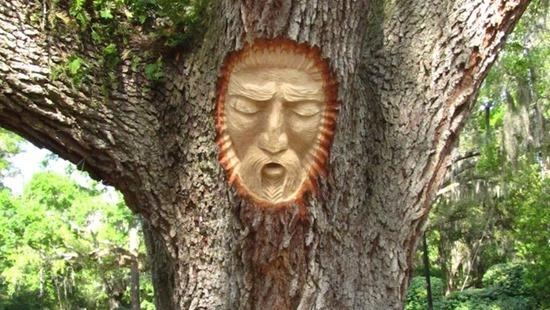 espírito árvore 04