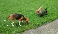 die Hunde unter sich
