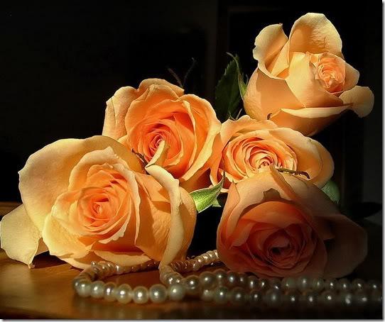para san valentin rosas y flores (5)