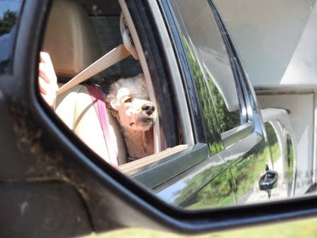 20140810_143849-spike-driving