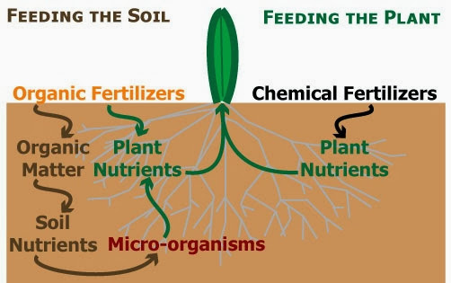 What is the Difference between Fertilizer Derived from Organic and Synthetic Sources?