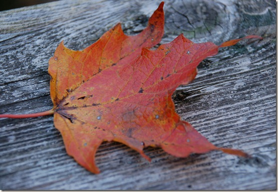 single-leaf