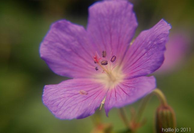 Fleur12