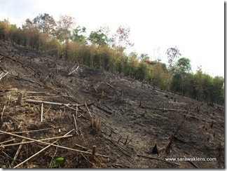slash_burn_farming_21