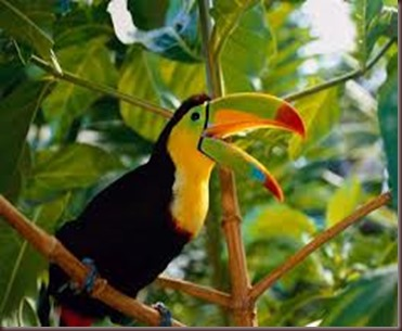 Amazing Pictures of Animals photo Nature exotic funny incredibel Zoo, Ramphastidae, Toucan, Bird, Alex (7)