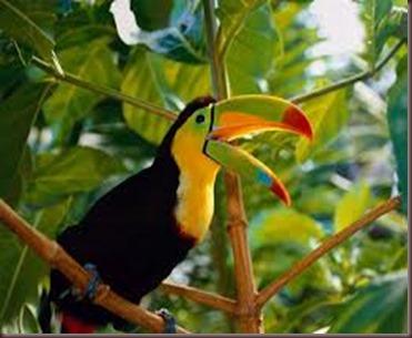 Amazing Pictures of Animals photo Nature exotic funny incredibel Zoo, Ramphastidae, Toucan, Bird, Alex (7)