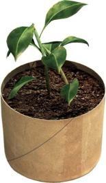 plant_resized400X266