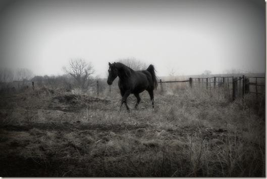 horses 135ab