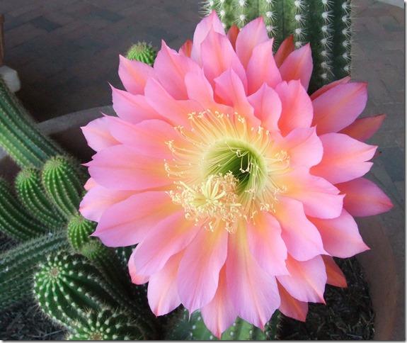 Pink tricho 4-22-2013 9-05-32 AM 3616x2712