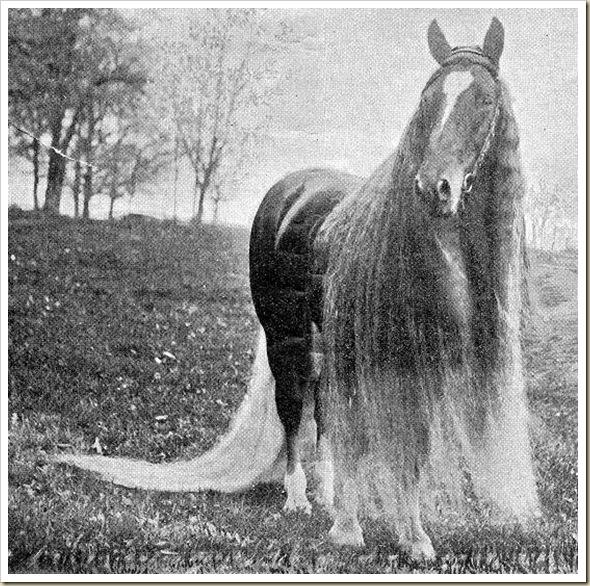 Linus le cheval aux crins les plus long du monde (6)