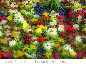 'Flowers' photo (c) 2007, Maciej Lewandowski - license: http://creativecommons.org/licenses/by-sa/2.0/