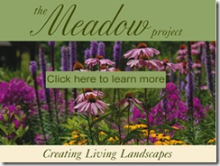meadowproject
