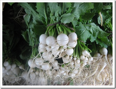 JAPANESE TURNIPS 002