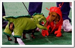 oktoberfest-nw-wiener-dogs[1]