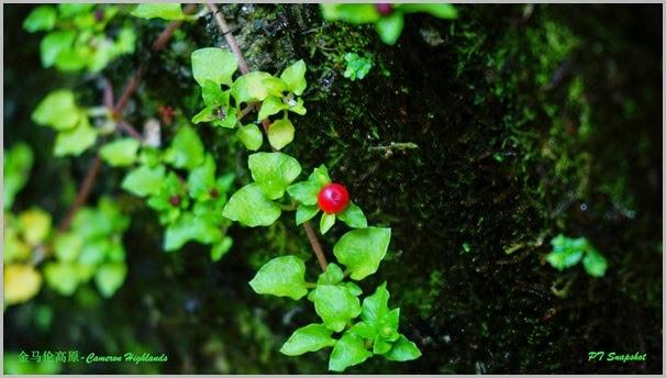 万绿丛中一点红