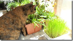 Prime-wants-aloe-not-cat-grass