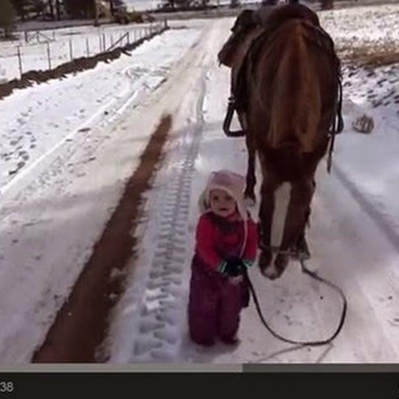 Μικρό κορίτσι και το άλογο της