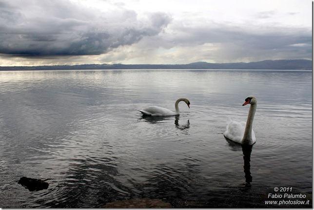 FPalumbo_lago-di-Bracciano-con-cigni