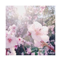 BlossomBlush