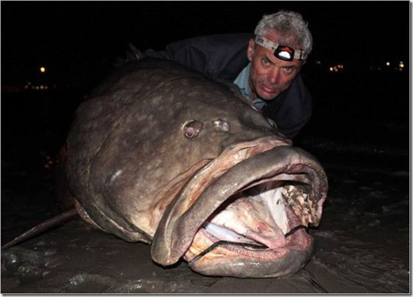 big-fish-fishing-23