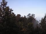Burangrang summit ridge (Daniel Quinn, November 2011)