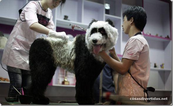 cosasdivertidas animales teñidos  (11)