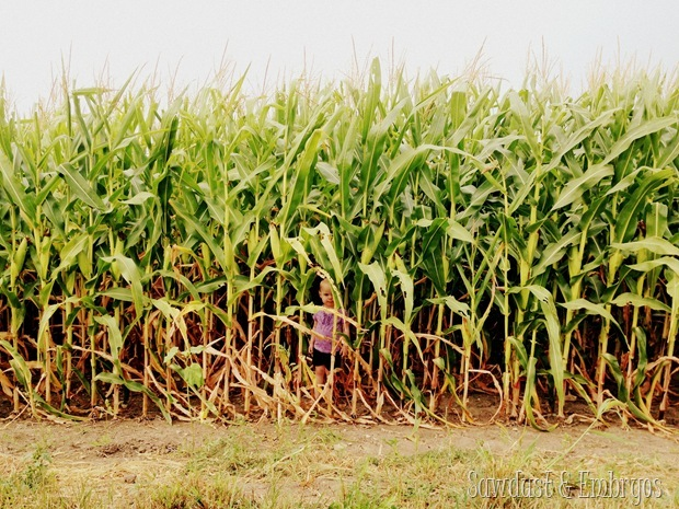 Children of the Corn {Sawdust and Embryos} (2)