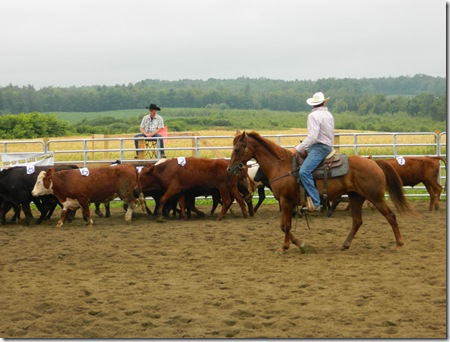 Team Penning 2011 010