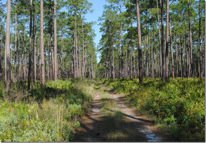 Florida Trail - Osceola National Forest
