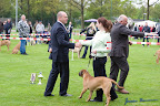 20100513-Bullmastiff-Clubmatch_30875.jpg