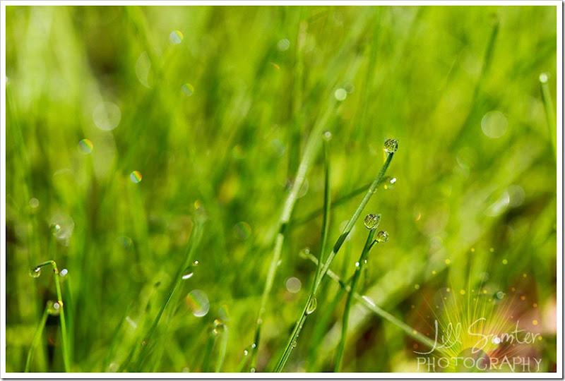 dewdrops-4725